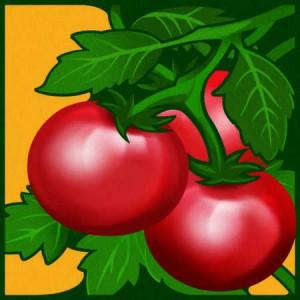 tomatoe pic