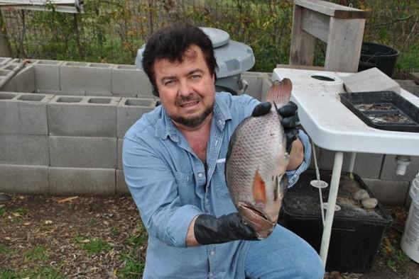 5lb Tilapia from the Aquaponics and Earth urban farm - Tilapia Breeding