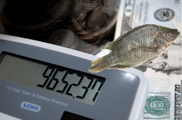 In order to breed tilapia for Tilapia farming you must budget