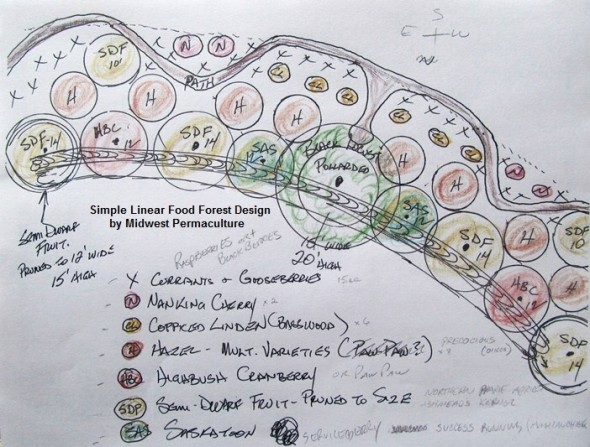 linea guild in permaculture food forest