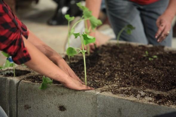 Planting 800